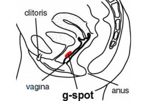 G_spot_in_women