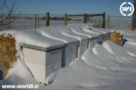 کندوی عسل در زمستان