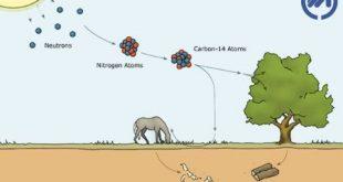 کربن 14