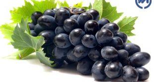 فواید انگور سیاه