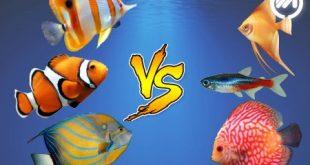 مقایسه ماهی آب شور با آب شیرین