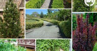 گل های چهار فصل برای باغچه حیاط